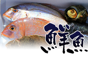 加太の鮮魚