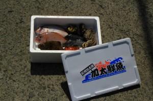 鮮魚商品6例