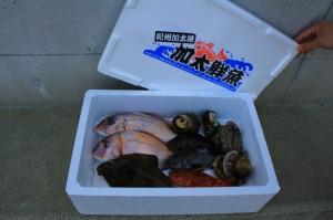 鮮魚商品5例