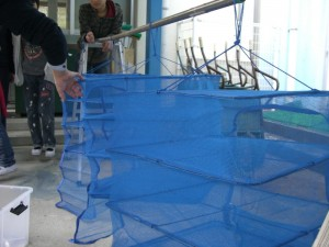 このような網のカゴで天日干しをします。